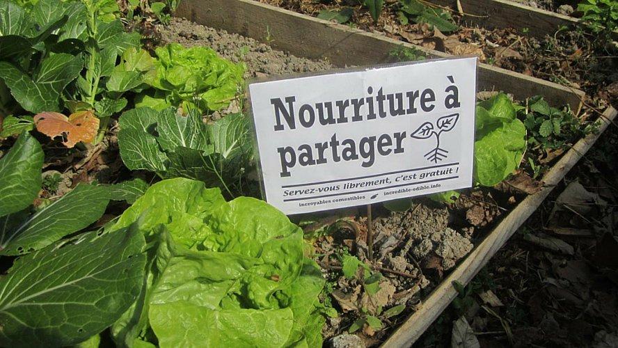 incroyables-comestibles-potagers-urbains-legumes-gratuits-une