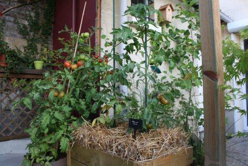 tomates-143a9