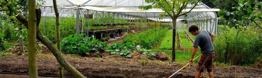 Potager permaculture archives sant nutrition for Rendement permaculture
