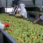 10 aliments fabriqués en Chine qui sont remplis de plastique, de pesticides et de produits chimiques cancérigènes