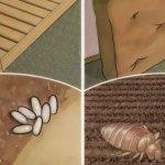 Votre lit est rempli d'acariens toxiques pour les poumons. Voici comment les tuer rapidement, facilement et naturellement.