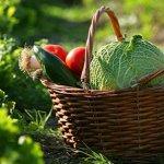 Les 31 aliments les plus sains de la planète